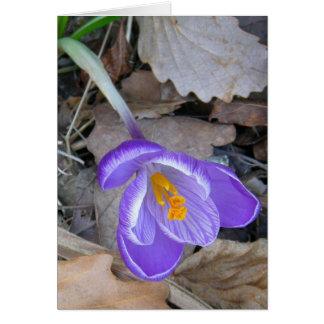 Azafrán púrpura tarjeta