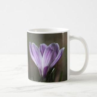 Azafrán púrpura taza