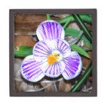 Azafrán rayada púrpura y blanca cajas de recuerdo de calidad