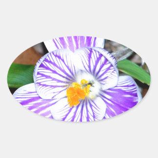 Azafrán rayada púrpura y blanca calcomanía oval personalizadas
