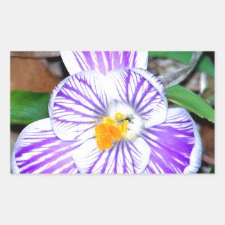 Azafrán rayada púrpura y blanca rectangular altavoz