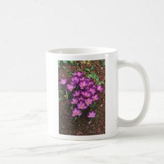 Azafrán (taza) taza clásica