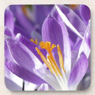 Azafrán violeta de la primavera posavasos