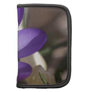 Azafrán violeta desde arriba planificadores