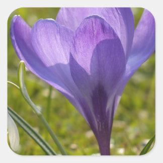 Azafrán violeta pegatina cuadradas personalizadas