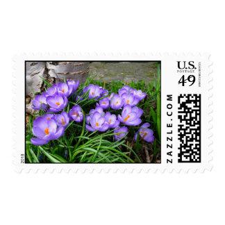 Azafranes de la primavera sellos
