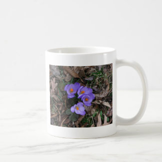 Azafranes florecientes taza clásica