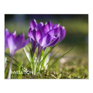 "Azafranes púrpuras DSC0703 Invitación 4.25"" X 5.5"""