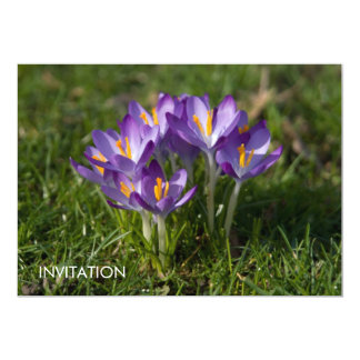 "Azafranes púrpuras DSC5451 Invitación 5"" X 7"""