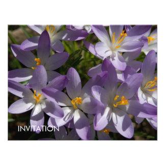 Azafranes púrpuras DSC5454 Invitaciones Personalizada