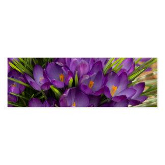 Azafranes púrpuras DSC5938 Tarjetas De Visita Mini