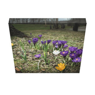 Azafranes púrpuras impresión en lona estirada