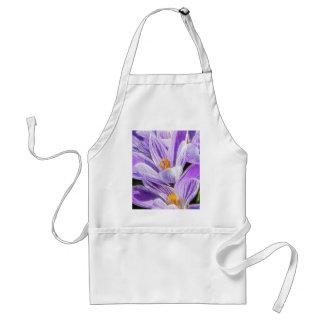 Azafranes rayadas púrpuras perennes delantal