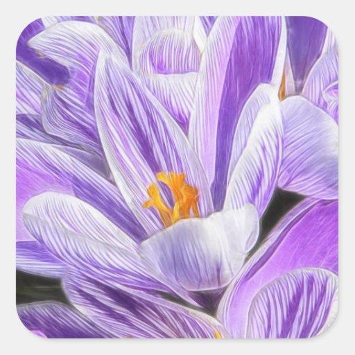 Azafranes rayadas púrpuras perennes pegatina cuadrada
