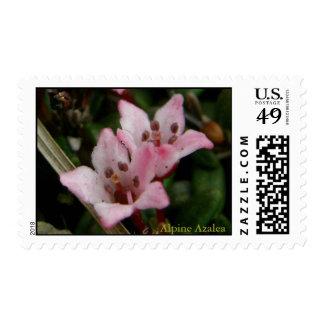 Azalea alpina (procumbens del Loiseleuria) Sellos