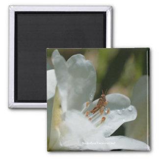 Azalea And Grasshopper Flower Photo Magnet