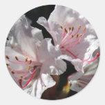 Azalea blanca pegatina redonda