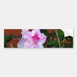 Azalea Blooming By A Brick Wall Bumper Sticker