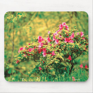 Azalea blooming mouse pad