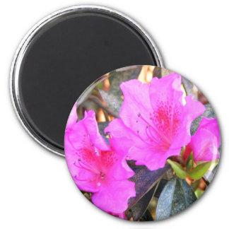 Azalea Blossom magnet