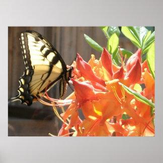Azalea del natural de la llama de la mariposa de S Posters
