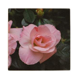 Azalea Flowers Maple Wood Coaster