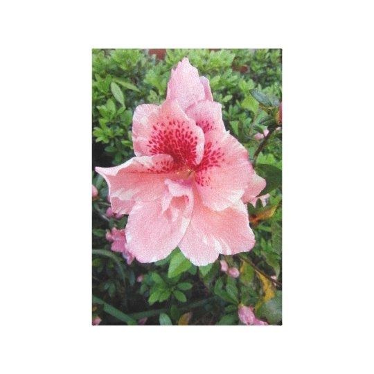 Azalea in Pink Canvas Print