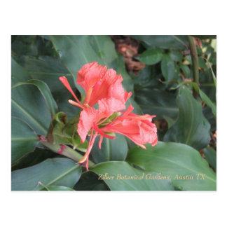 Azalea, jardines botánicos de Zilker, Austin TX Postales