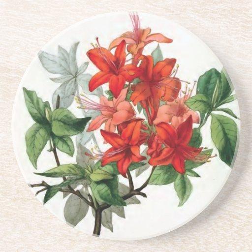 """""""Azalea Nudiflora"""" Vintage Flower Illustration Coasters"""