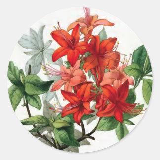 """Azalea Nudiflora"" Vintage Flower Illustration Classic Round Sticker"