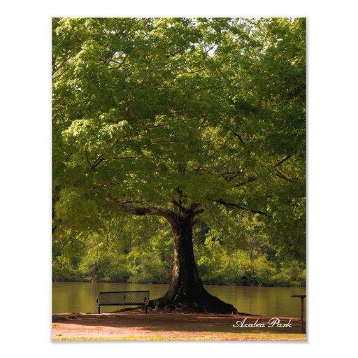 Azalea Park Roswell, Ga Photograph