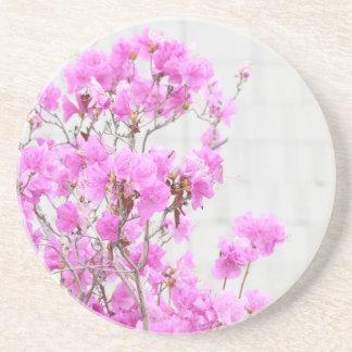 Azalea pink flowers photography beauty soft backgr drink coasters