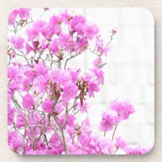 Azalea pink flowers photography beauty soft backgr coasters