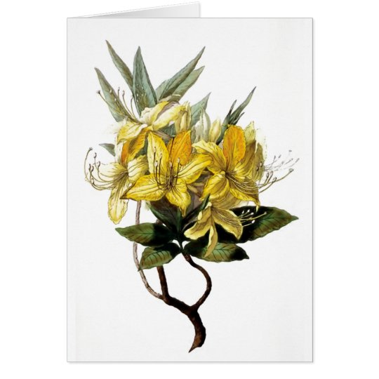 """Azalea Pontica"" Vintage Flower Illustration Card"
