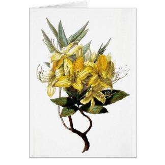 """""""Azalea Pontica"""" Vintage Flower Illustration Greeting Card"""