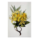 """""""Azalea Pontica"""" Vintage Flower Illustration Print"""