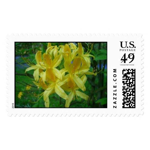 Azalea Postage Stamps