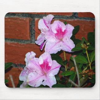 Azalea que florece por una pared de ladrillo alfombrillas de raton