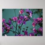 Azalea rosada y significado póster