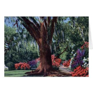 Azaleas at Magnolia near Charleston South Carolina Greeting Cards