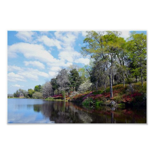 Azaleas At Rice Mill Pond Poster