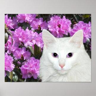 Azaleas blancas del gato póster