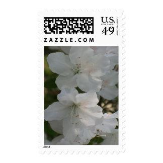 Azaleas blancas franqueo