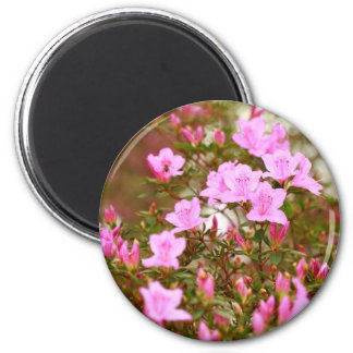 Azaleas blooming in springtime 2 inch round magnet
