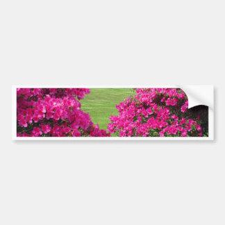 Azaleas Car Bumper Sticker