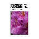 Azaleas de color de malva - franqueo floral de la