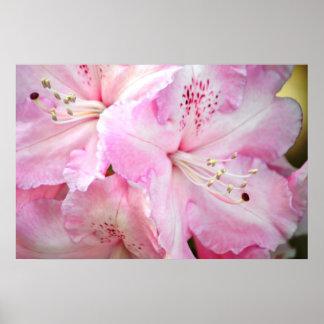 Azaleas del rosa del caramelo de algodón impresiones