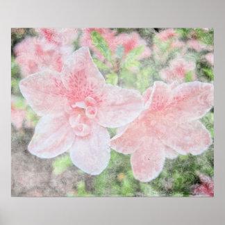 Azaleas descoloradas póster