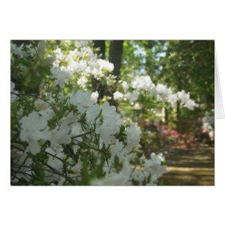 Azaleas en blanco tarjeta pequeña