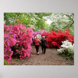 Azaleas en el arboreto nacional - Washington, DC Poster